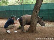 四年前男子救助了一头犀牛,而后犀牛报恩的方式让他感动流泪
