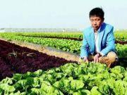这个农民把菜卖到迪拜,1年赚了4.8个亿,马云都佩服