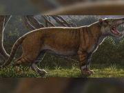 """2200万年前远古灭绝怪兽堪比《指环王》中""""座狼"""""""