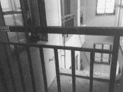15岁少年强奸7岁女童后推下25楼 其父:孩子我不管