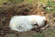 为什么狗狗死后不能埋?不止是迷信,科学家道出真实内幕