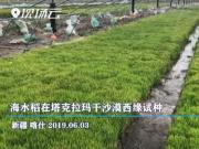 中国又一科技领先世界!袁隆平将水稻种在了沙漠