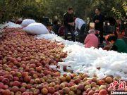 天价苹果背后:部分大宗经销商囤货居奇炒期货挣钱