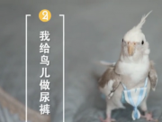 女孩做鸟用尿不湿 创新又实用还受欢迎