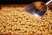 全球最大大豆消费国正热火采购 美国豆农却很痛苦