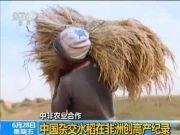 中国杂交水稻创纪录 每公顷产量10.8吨