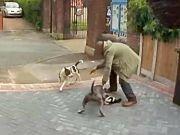 女孩目睹路边两狗咬死一猫 发现是自家猫后伤心欲绝