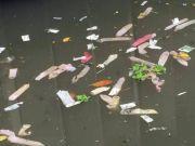 这条河里飘满避孕套,官方回应了