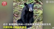 黑熊因与人过亲被安乐死,平时对人很友好 网友:到底是谁的错?