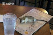 恶心坏!女子正想点什么 老鼠凌空掉菜单晕死过去