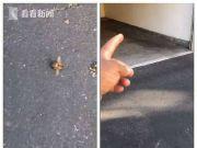 美加州地震出现离奇一幕:大量蜜蜂相继死亡