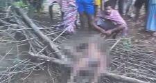 印度一7岁女孩熟睡中被大象从床上拽走 踩踏致死