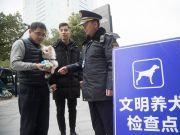 媒体:在人的安全面前 饲养宠物狗自由须做出让步