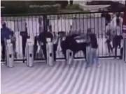 合肥大猩猩出逃过程曝光,工作人员被一脚踹飞,徒手拔麻醉枪