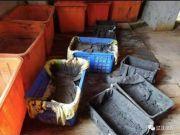 辽宁俩金矿被盗 破案时180多斤矿泥已成黄金白银