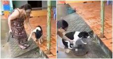 狗狗因追逐邻家鸡鸭,遭主人砍下爪子