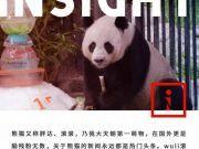 熊猫创创惨死他乡,生前疑似遭到虐待