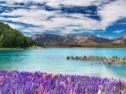 新西兰一起严重车祸造成3名中国游客遇难