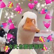 95后重庆妹子卖鸭子一万五一只 有人买?反正王思聪买了俩