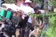 令人痛心!越南狗贩为卖高价给狗强灌废水增重