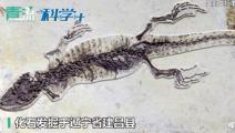 科学家发现胃容物标本揭神奇食谱,网友:一亿年前蜥蜴吃麻小?