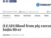 """韩宰近5万头猪遏制猪瘟蔓延 河流被猪血""""染红"""""""