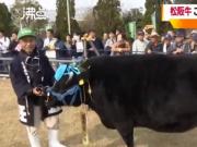 1头牛168万人民币!今年3岁,重达678公斤