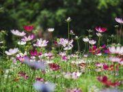 """这个人来到西藏后,被西藏人称为""""一种花"""",至今这种花名都在叫"""