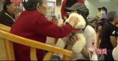 狗界高考毕业生累计出勤51次 与病人进行亲密互动