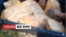 泰国男子沙滩捡石头价值近百万,竟是珍稀海琥珀