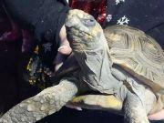 45岁乌龟引火烧屋 被消防员救出后一脸不爽