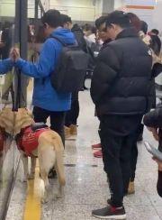 像话吗?上海地铁一男子多次骚扰导盲犬,女孩制止被骂了一路