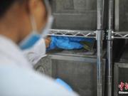 美国将向环境中释放数百万转基因蚊子 遭严厉批评