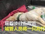 湖南永州城管当街打死宠物狗 执法车上立牌:不牵绳一律捕杀
