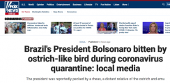 巴西总统隔离期被鸵鸟咬伤 网友们却这样说