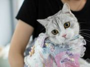 90后女孩给猫做汉服月入7万