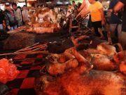 """印尼""""恐怖市场"""",这里出售的""""美食""""有蝙蝠、老鼠、猴子……"""