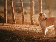 教唆女友与狗发生关系,情侣先后获刑,狗狗被安乐死