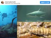 科学家在肯塔基州发现3.3亿年前鲨鱼头