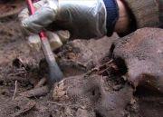 学生宿舍下面发现人骨遗骸碎片,包括头骨、前臂和胫骨