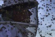 疫情中损失惨重的养蜂人自杀:蜜蜂死了六七大桶 密密麻麻都拖不出来