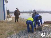 湖北潜江小龙虾复市 电话网上预约后发往全国各地