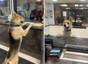 美国一宠物狗走失 自己到当地警察局报案