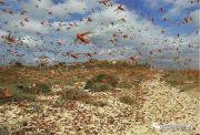古代发生蝗灾时,为啥灾民宁可挨饿也不吃蝗虫?专家:想但不能吃