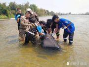 中国男子在泰国遭4名同胞杀害 尸体被装行李箱丢入河中