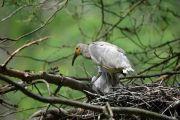 今年世界野生动植物日主题:维护地球所有生命