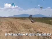 超大蝗虫席卷东非 中国游客偶遇拍下蝗虫过境一幕