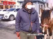 东北大爷策马奔腾买菜,被交警拦下:退休养的马,我家院儿大