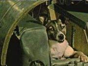 50年前被美国送上太空的猴子,如今变成这样!结局你可能不信