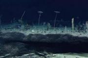 海底3700米下拍到的一张图,让人不禁疑惑:这真的还是地球吗?